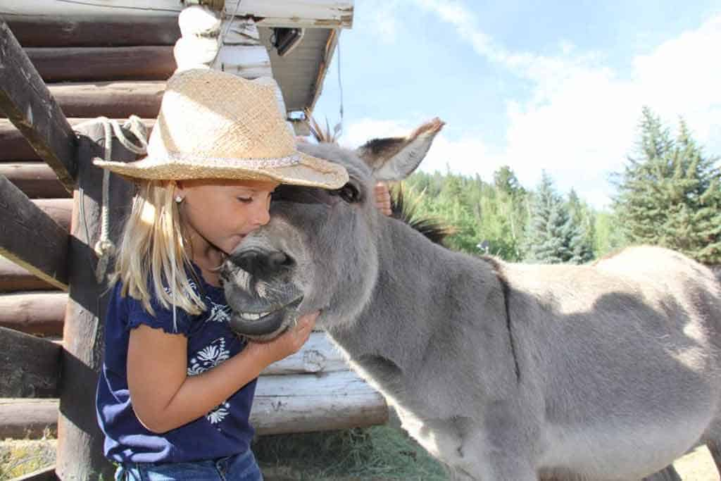 Petey the Donkey is our amazing dude ranch mascot (and a shameless lover of hugs and kisses).