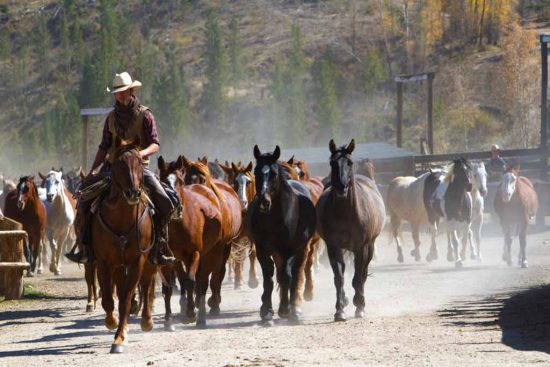 The wranglers lead the horses out. It's a dusty deal, known as the Daily Jingle. There's always work to do here at this guest ranch.