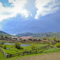 An overview of the Ranch's main compound