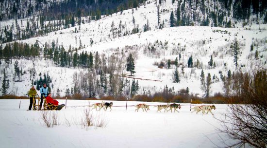dogsled-rides
