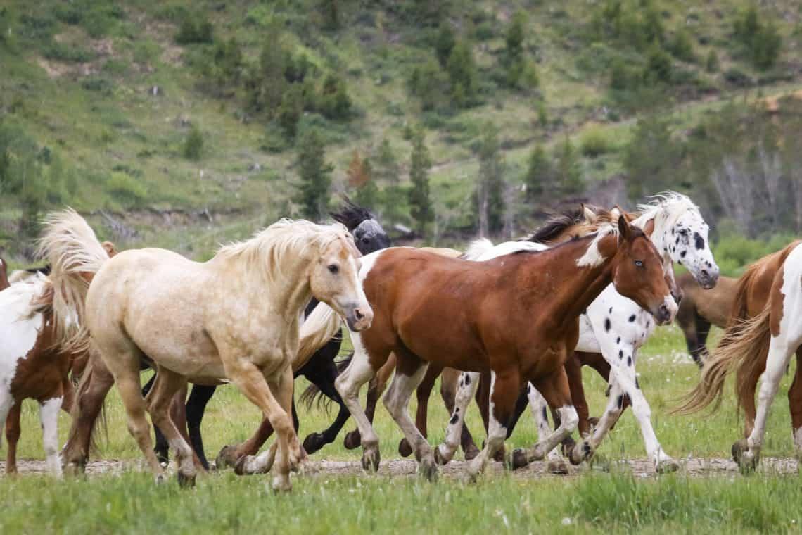 horses running in field
