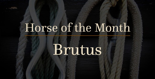 horse of the month brutus