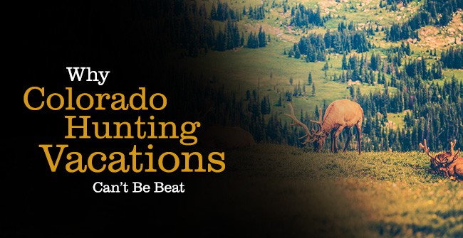 C Lazy U - Colorado Hunting Trips