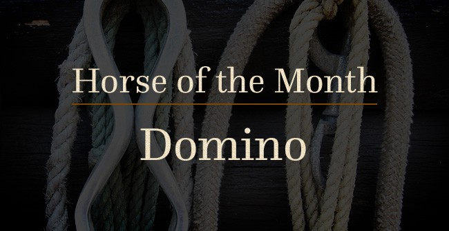 C Lazy U Horse of the Month Domino
