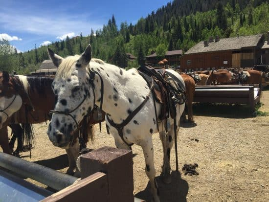 Domino - C Lazy U Horse of the Month