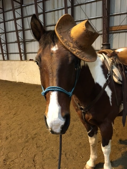 C Lazy U - Horse of the Month - Dusty