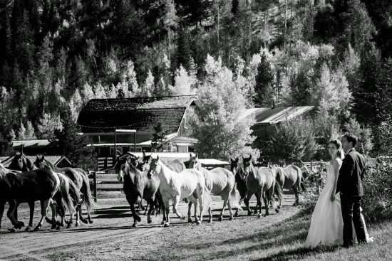 Ranch wedding photo with horses