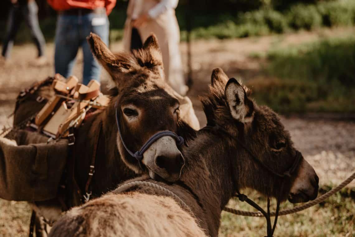 donkey's hugging