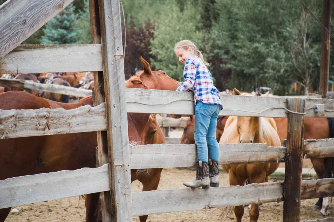 girl greeting horses