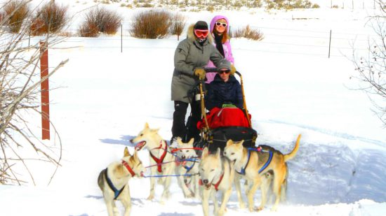 activities-dog-sledding-horizontal
