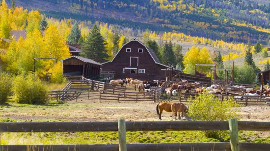 barn-with-yellow-aspens-hills