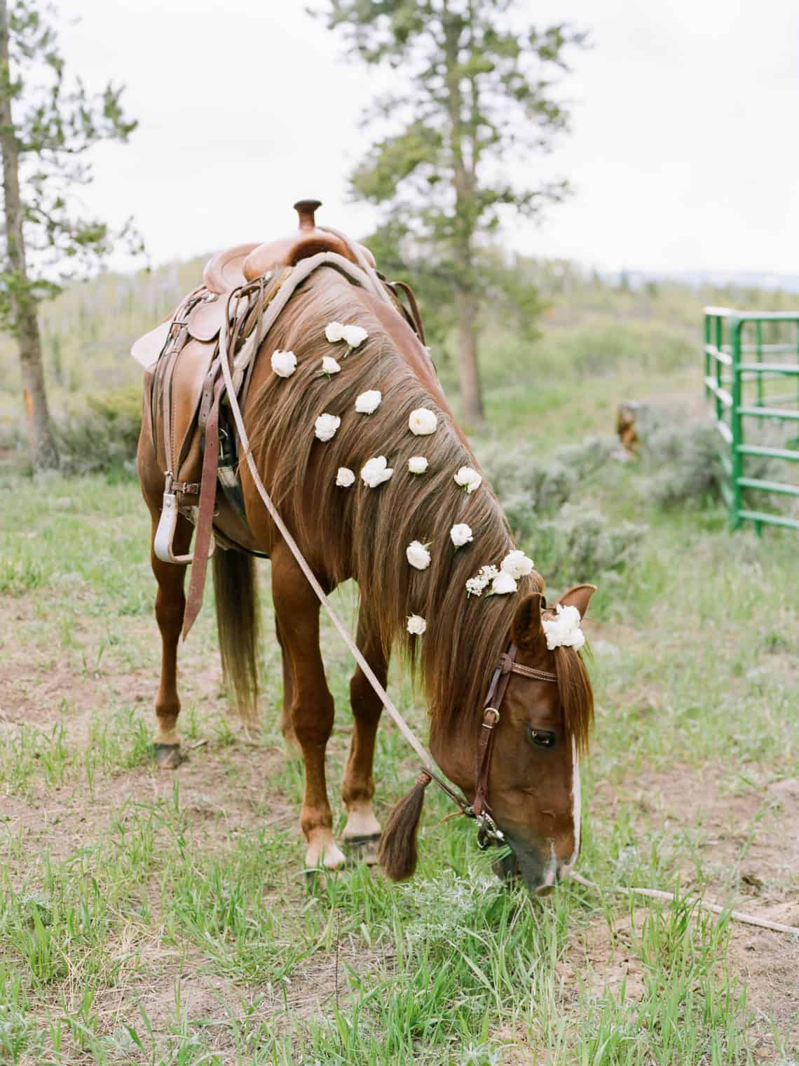 horse with wedding flowers