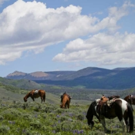 Horses enjoy a lunch break while on a trail ride up in the mountains