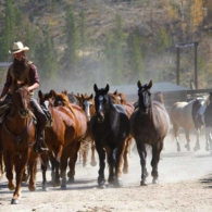 Ranch horses kicking up dust on their way out to pasture