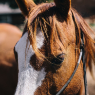 A ranch horse close-up