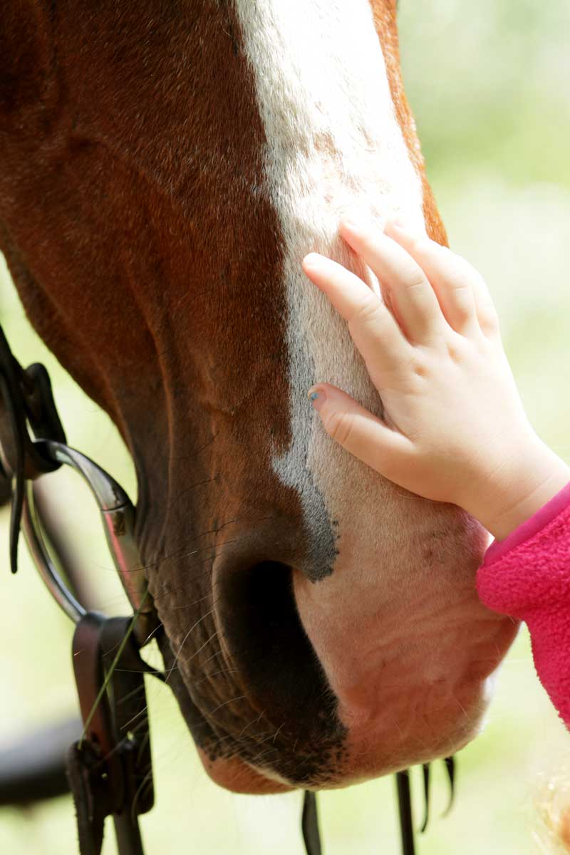 Child hand petting horse on nose