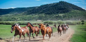 Plan a family vacation at our dude ranch for summer 2021!