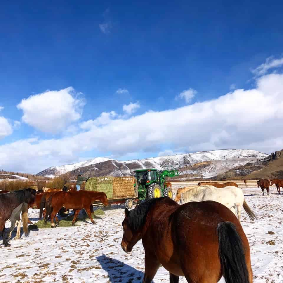 the Feed Wagon activity at C Lazy U Ranch