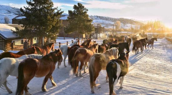 horses gather in the yard before work each day