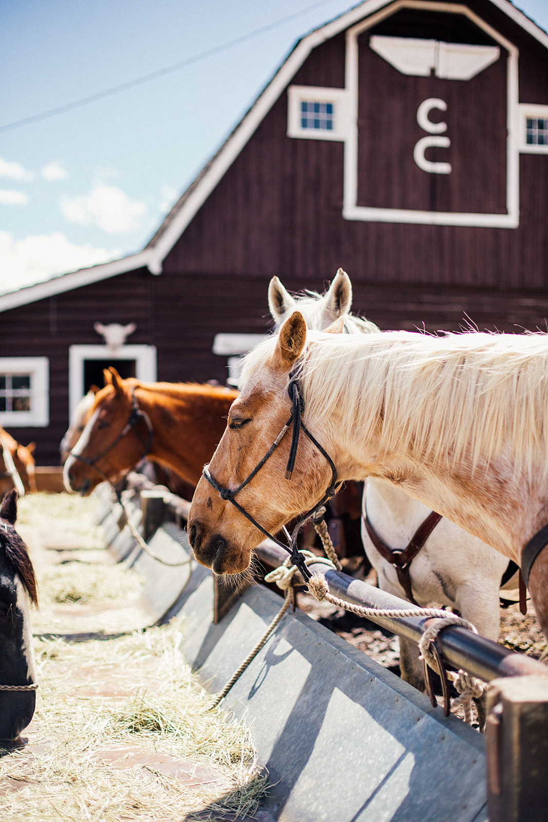 Family Vacations: All-Inclusive Luxury Dude Ranch