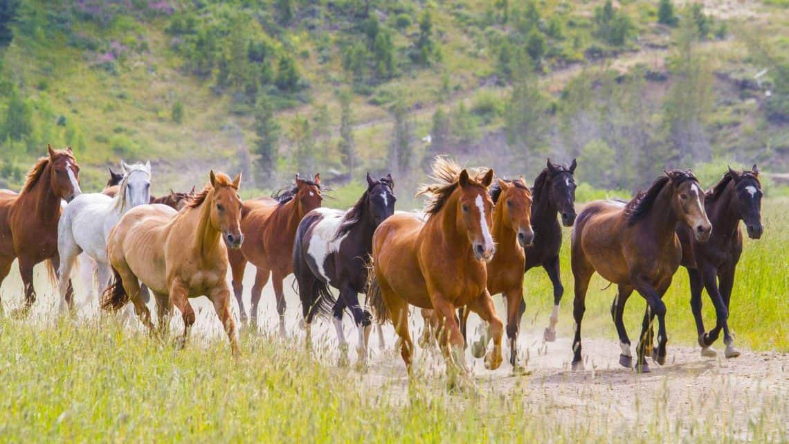 horses-thundering-by