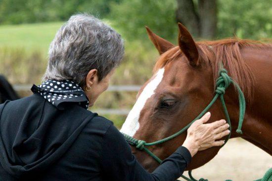 woman petting horses face