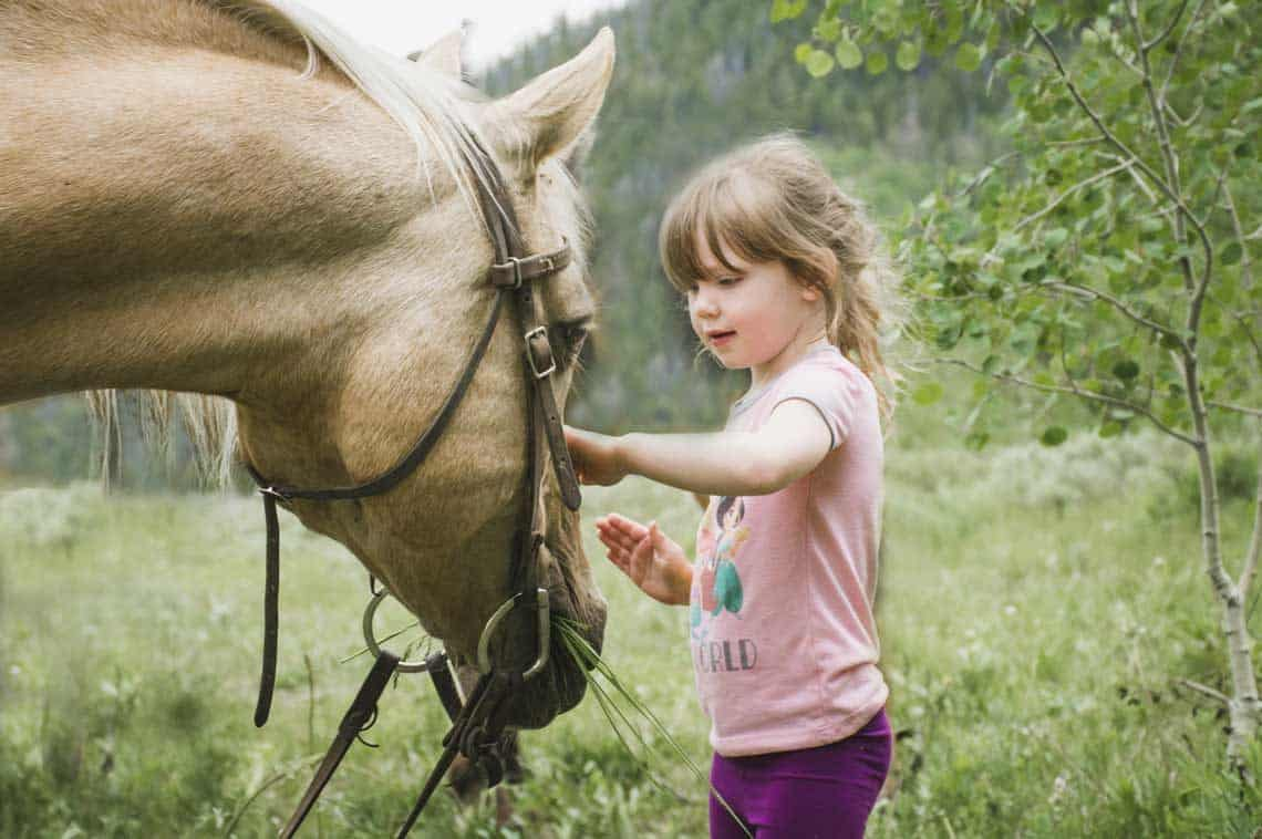 a little girl pets the nose of a horse