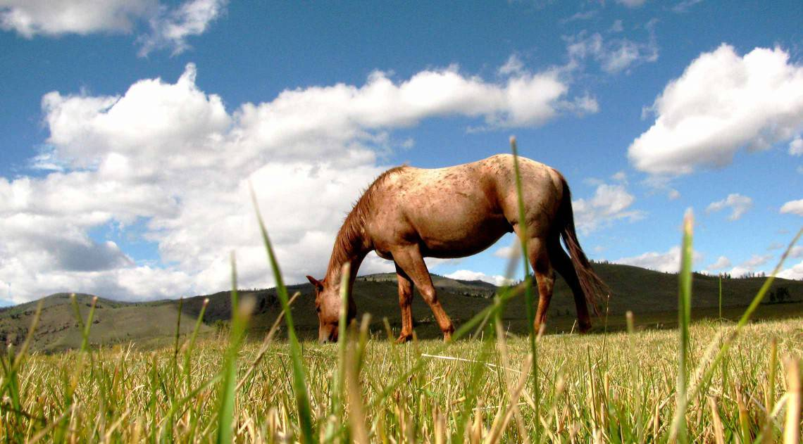 summer-horse-in-pasture-closeup